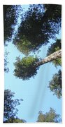 California Redwood Trees Fine Art Prints Forest Beach Towel