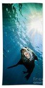 California Sea Lion, La Paz, Mexico Beach Towel by Todd Winner