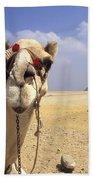 Camel In Giza Egypt Beach Sheet
