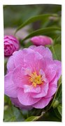 Camellia Camellia X Williamsii Donation Beach Towel