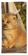 Canadian Lynx Kitten, Alaska Beach Towel