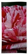 Candy Cane Rose Beach Towel