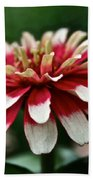 Candy Color Zinnia Beach Towel
