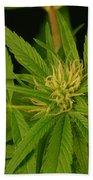 Cannabis Bud Beach Towel