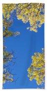 Canopy Beach Towel