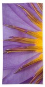 Cape Blue Waterlily Nymphaea Capensis Beach Towel
