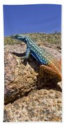 Cape Flat Lizard  South Africa Beach Towel by Piotr Naskrecki
