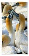 Cape Gannet Courtship Beach Towel by Bruce J Robinson