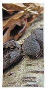 Carbon Balls Fungi - Daldinia Concentrica Beach Towel
