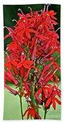 Cardinal Flower Full Bloom Beach Towel
