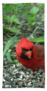 Cardinal In Springtime Beach Towel
