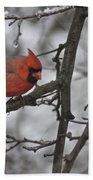 Cardinal Male 3666 Beach Towel