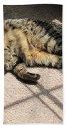 Cat Got Your Tongue Beach Towel