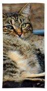 Cat Nap Interuption Beach Towel