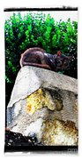 Cat On Medieval Wall Beach Towel