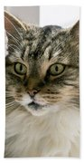 Cats Are Magical Beach Towel