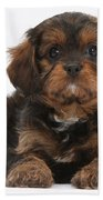Cavapoo Pup Beach Towel