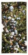 Cedar Blue Beach Sheet
