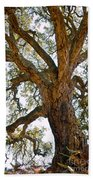 Centenarian Cork Tree Beach Towel