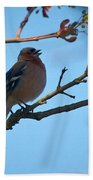 Chaffinch Beach Towel