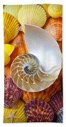 Chambered Nautilus  Beach Sheet