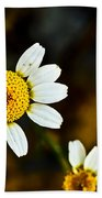 Chamomile Flower In Decay Beach Towel