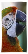 Chatty Macaw Beach Towel