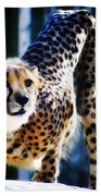 Cheeta Beach Towel