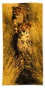 Cheetah Cubs Beach Towel