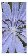 Chicory For Three Beach Towel