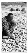 Chinese Man Drying Fish On The Shore - C 1902 Beach Towel