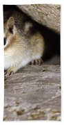 Chipmunk In Danger Beach Towel