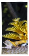 Christmas Tree Worm In Raja Ampat Beach Towel
