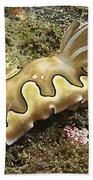 Chromodoris Coi Beige Nudibranch Beach Towel