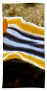 Chromodoris Magnifica Nudibranch Beach Towel