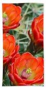Claret-cup Cactus 2am-28736 Beach Towel