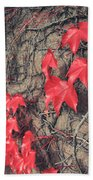 Clinging Beach Towel by Laurie Search