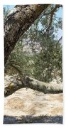 Close Up Olive Tree Beach Towel
