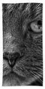 Close Up Portrait Of A Cat Beach Towel