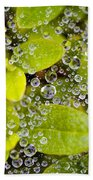 Closeup Of Morning Dew On Leaves Beach Towel