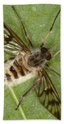 Cluster Fly Killed By Parasitic Fungus Beach Towel