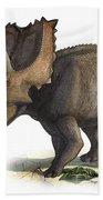 Coahuilaceratops Magnacuerna Beach Towel