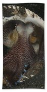 Coconut Octopus In Shell, North Beach Towel