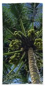Coconut Palm Beach Towel