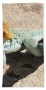 Collard Lizard Beach Towel