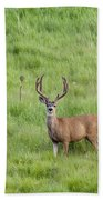 Colorado Deer Beach Towel