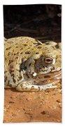 Colorado River Toad Beach Towel