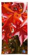 Colorful Fall Tree Red Leaves Art Prints Beach Towel