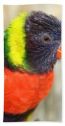 Colorful Lorikeet Parrot Beach Towel