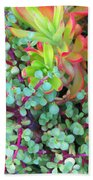 Colorful Succulent Plants For You Beach Towel
